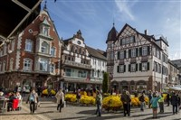 The Black Forest Chrysanthema Festival  2018