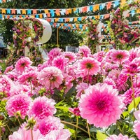 Hampton Court Flower Show and London