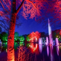 Stockeld Park Winter Illuminations