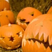 York Maze Halloween By Day